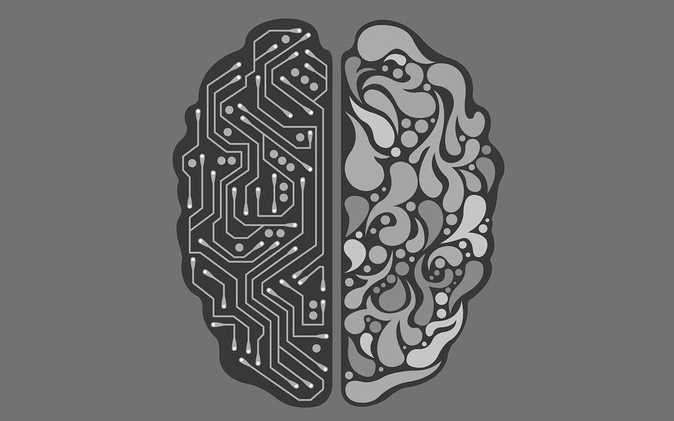 Diferencias entre niñas y niños (desarrollo cerebral)