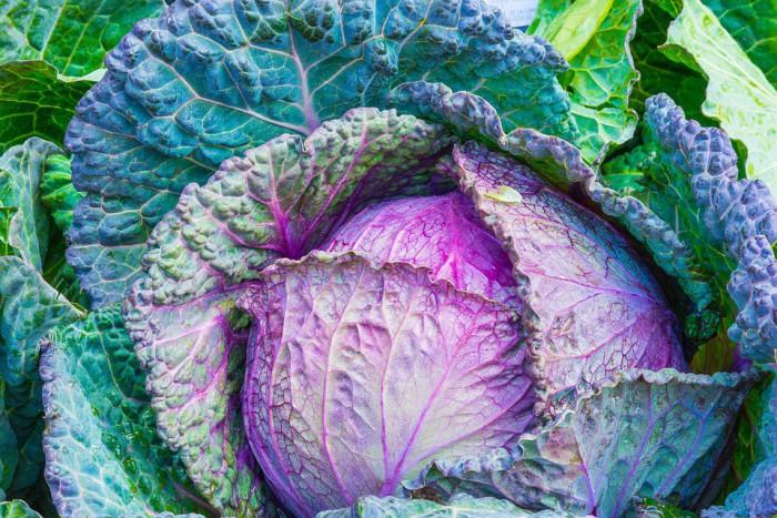 Razones por las cuales los niños no comen vegetales