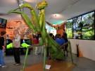 Visitas con niños: InsectPark, un museo de insectos único en Europa