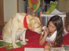 Patas y Libros, animación a la lectura infantil con perros en Alicante