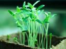 Ideas ecológicas para los peques