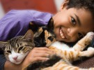 Niños y gatos: las razas más cariñosas