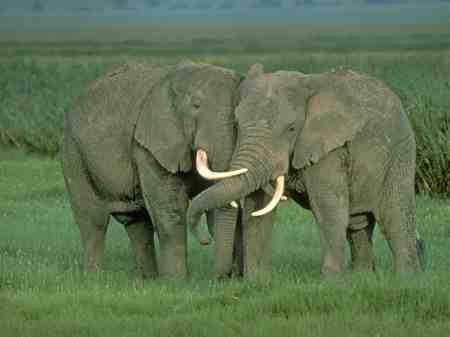 elefantes1.jpg