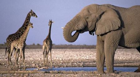 Hasta en 741 zonas protegidas se ha dividido al continente africano