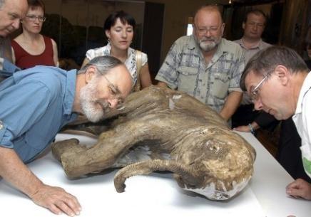 Lyuba, el bebe mamut