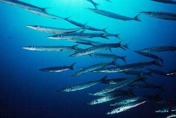 Espeton, la barracuda de Europa (1)