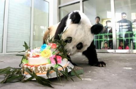Taotao en la celebración de un cumpleaños