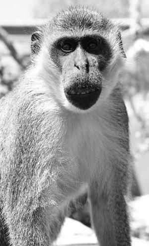 Mono tota