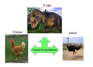 Cuadro Evolución