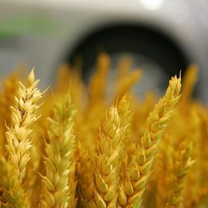 biocombustibles.jpg