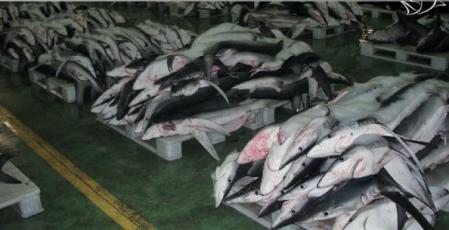 tiburon2.jpeg
