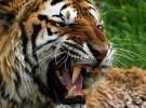 La extinción de las especies es 100 veces más rápida de lo que se pensaba