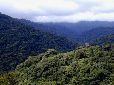 bosquemontañoso