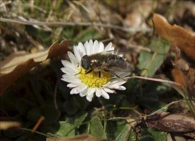 1022691282-equipo-entomologos-descubre-nuevas-especies-cabaneros.jpg