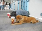 La crisis económica mundial amenaza a los animales domésticos