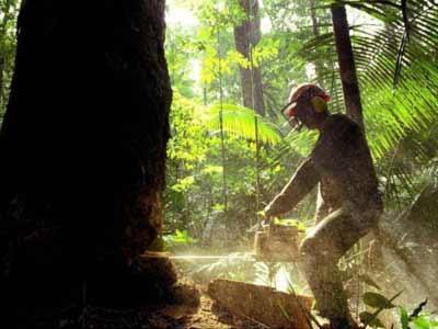 deforestacionamazonia