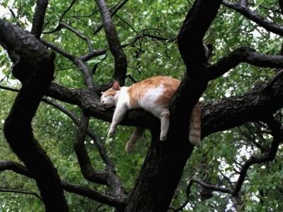 bajar al gato del árbol