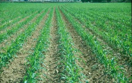 La agricultura de conservación es beneficiosa para el medio ambiente