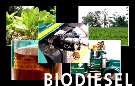 biodiesel_titlephoto.jpg