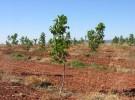 Bankinter plantará árboles gracias a la factura electrónica