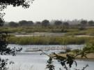 Pesca ilegal en Doñana