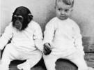 El hombre y el chimpancé son más diferentes de lo que se creía