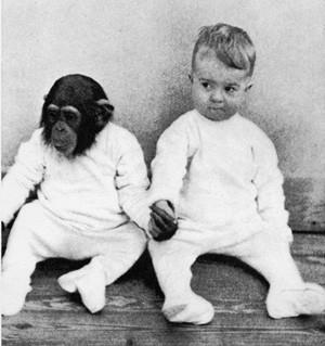 hombreychimpancé