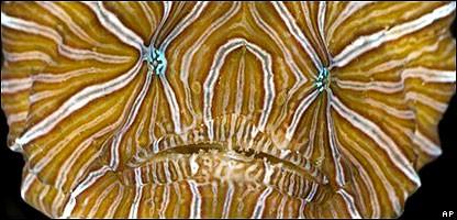 pez psicodelico