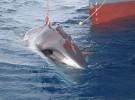 El Parlamento Europeo exige prohibir la caza de ballenas con fines científicos
