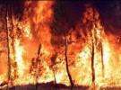 200 muertos en los incendios de Australia