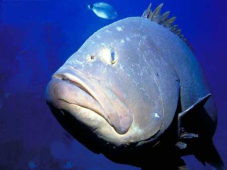 Frenar pérdida de biodiversidad marina en España exige proteger 65 km2 al día