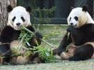 Reserva mundial de pandas