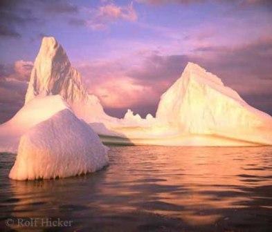 Océanos Ártico y Antártico: compartiendo especies
