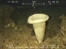 El 38% de las especies de agua dulce del ámbito mediterráneo en peligro