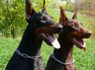 Creencias falsas sobre los perros