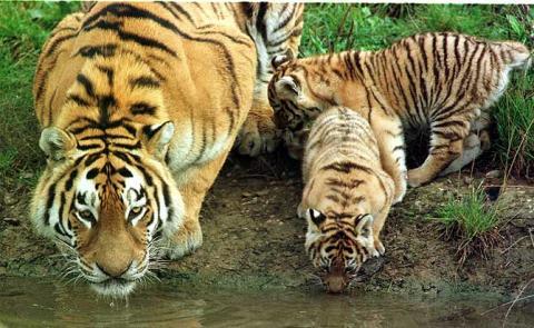 animales + agua