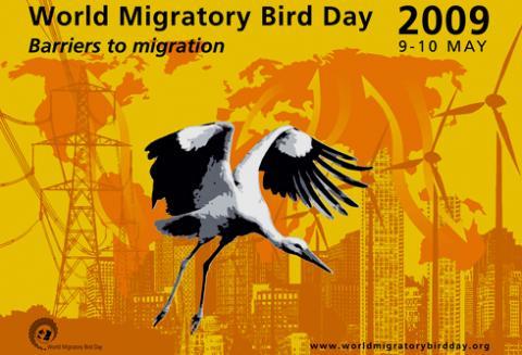 Afiche del Día Mundial de las Aves Migratorias