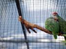 El traslado comercial de animales puede ser peligroso