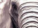 El elefante que sufre de depresión