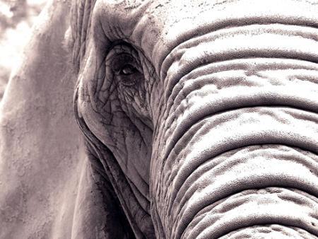 Un elefante sufre de depresión