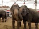 Prohibirían los circos en Grecia por maltrato animal