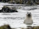 Europa limita la matanza de focas para fines comerciales