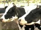 FAO presentó un sitio web sobre bienestar animal