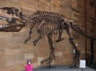 <em>Giganotosaurus</em>, un grande de verdad