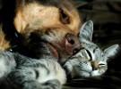 Perros y gatos criaron a una niña en Siberia