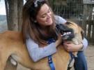 Perros que pueden olfatear el peligro en diabéticos