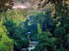 Lula privatizará gran parte del Amazonas