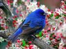 Nuestros amigos los pájaros