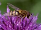 La abeja es noticia