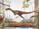 <em>Alvarezsaurus</em>
